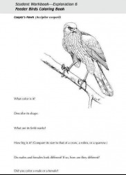 Cornells Feeder Birds Coloring Book